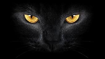 Черная кошка. (Каталог номер: 11149)