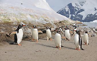 Животные Антарктики (Каталог номер: 11172)