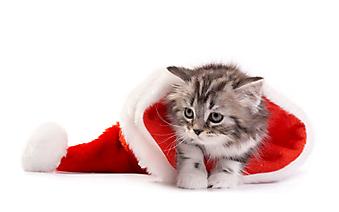 Новогодний котенок. (Каталог номер: 11178)