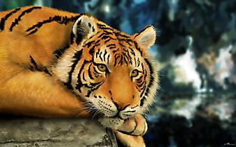 Тигр на отдыхе. (Каталог номер: 11184)