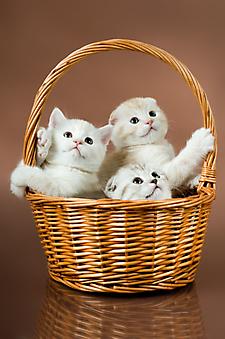 Корзинка с котятами. (Каталог номер: 11194)