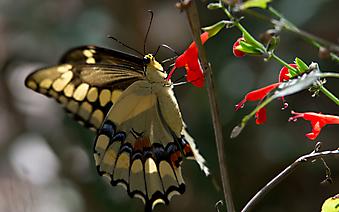 Бабочка на стебле. (Каталог номер: 11200)