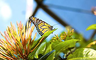 Бабочка на цветке. (Каталог номер: 11202)