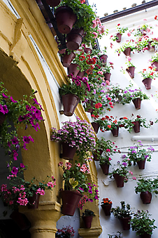 Дворик с цветами. Испания (Каталог номер: 14084)