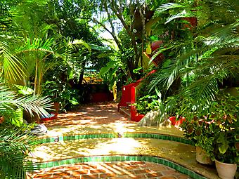 Тропический дворик (Код изображения: 14032)