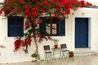 Столик на двоих в цветущем дворике (Код изображения: 14050)