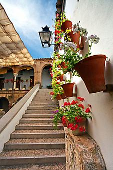 Цветы на стенах. Испания (Каталог номер: 14087)