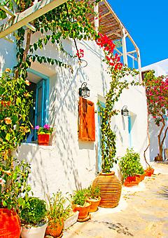 Солнечный дворик утопает в цветах (Каталог номер: 14100)