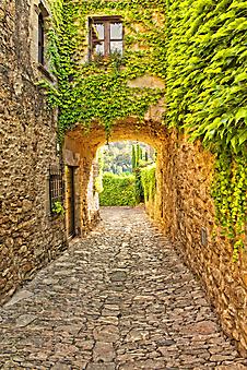 Стена покрытая зеленью. Каталония. Испания (Каталог номер: 14102)