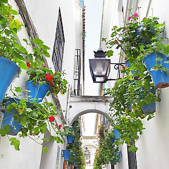 Узкая улочка с цветами (Каталог номер: 14121)