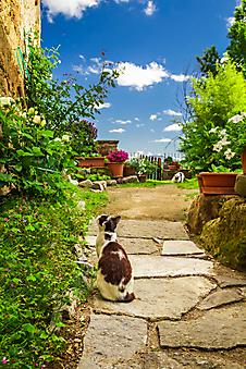 Кошки в старом саду (Каталог номер: 14130)