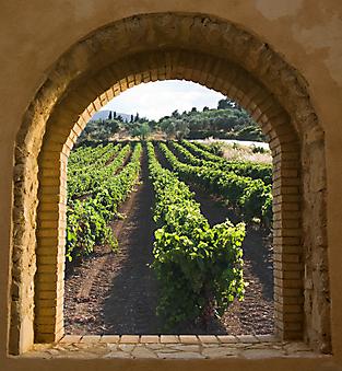 Вид из окна на виноградник (Каталог номер: 15052)