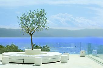 Балкон с оливковым деревом (Каталог номер: 15055)