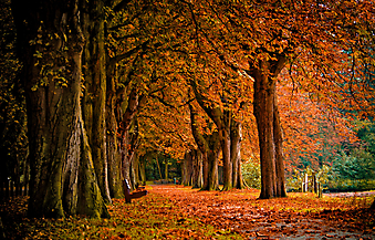 Осенний лес. (Код изображения: 18002)