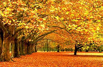 Осень в парке. (Код изображения: 18003)