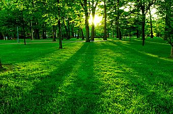 Зеленый парк. (Код изображения: 18004)