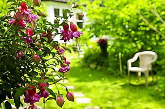 Пышный зеленый сад. (Код изображения: 18007)
