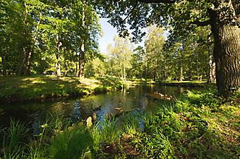Национальный парк, Гатчина. (Код изображения: 18009)