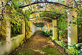 Сад. (Код изображения: 18013)