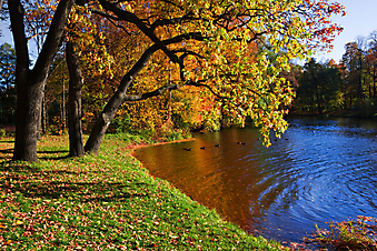 Осень в парке. (Код изображения: 18015)