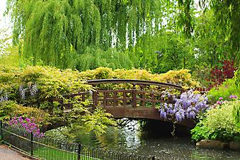 Королевский сад. (Код изображения: 18021)
