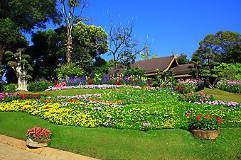 Цветы в саду. (Код изображения: 18022)
