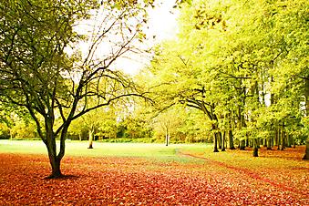 Тихий парк. (Код изображения: 18023)
