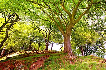 Красивый парк. (Код изображения: 18024)