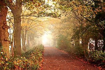 Туманное осеннее утро. (Код изображения: 18025)
