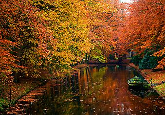 Осень в лесу. (Код изображения: 18026)