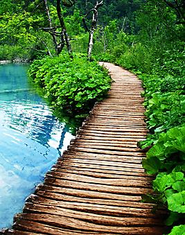 Деревянная дорожка. (Код изображения: 18030)
