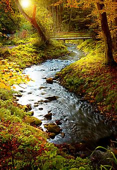 Осенний лес. (Код изображения: 18031)