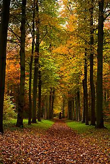 Осенний лес. (Код изображения: 18032)
