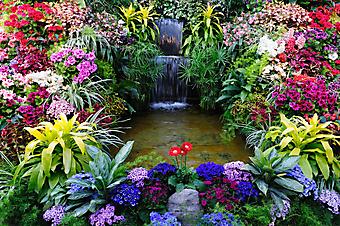 Райский сад (Каталог номер: 18042)