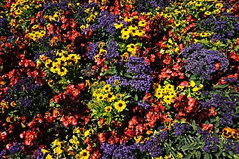 Ковер из цветов (Каталог номер: 18043)