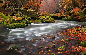 Осень в парке (Каталог номер: 18063)