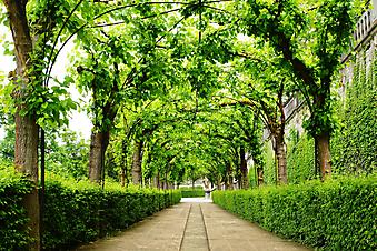 Зеленая аллея (Каталог номер: 18074)
