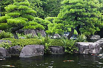 Японский сад с прудом (Каталог номер: 18075)