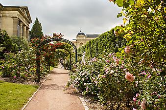 Сад Роз, Париж (Каталог номер: 18077)