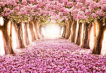 Цветущий розовый сад (Каталог номер: 18079)