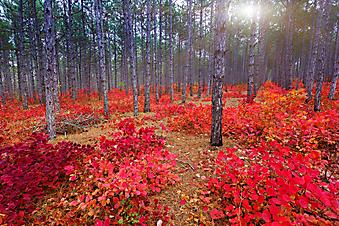 Осень в парке, Крым (Каталог номер: 18083)