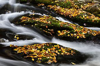 Камни с опавшей листвой (Каталог номер: 18085)
