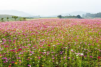 Красивый сад, Таиланд (Каталог номер: 18088)