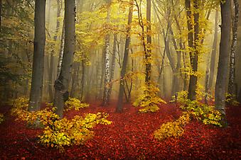 Осень в туманном лесу (Каталог номер: 18093)