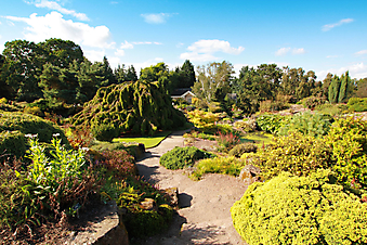 Великолепный летний сад (Каталог номер: 18094)
