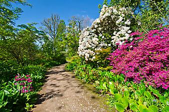 Тропинка в цветущем саду (Каталог номер: 18097)