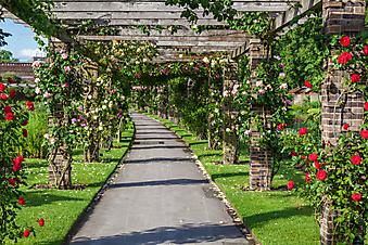 Аллея роз. Королевский ботанический сад (Каталог номер: 18100)