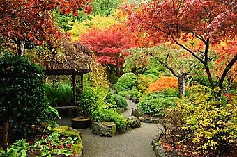 Яркий японский сад, Канада (Каталог номер: 18112)