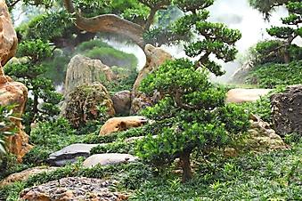 Утонченный китайский сад (Каталог номер: 18118)