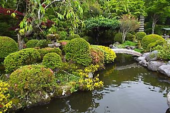 Изящный японский сад (Каталог номер: 18127)